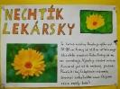 Plagáty liečivé rastliny