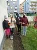 SadenieNarcisov7_VSETCI-zaloha_IMG_20201123_150305